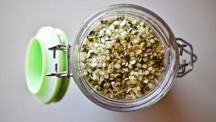La graine de chanvre, bonne pour la santé et l'environnement