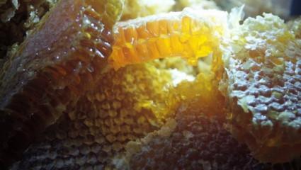 En quête de brut: du miel en rayon pour les puristes