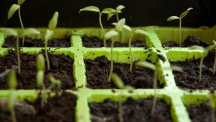 Protéger ses semis